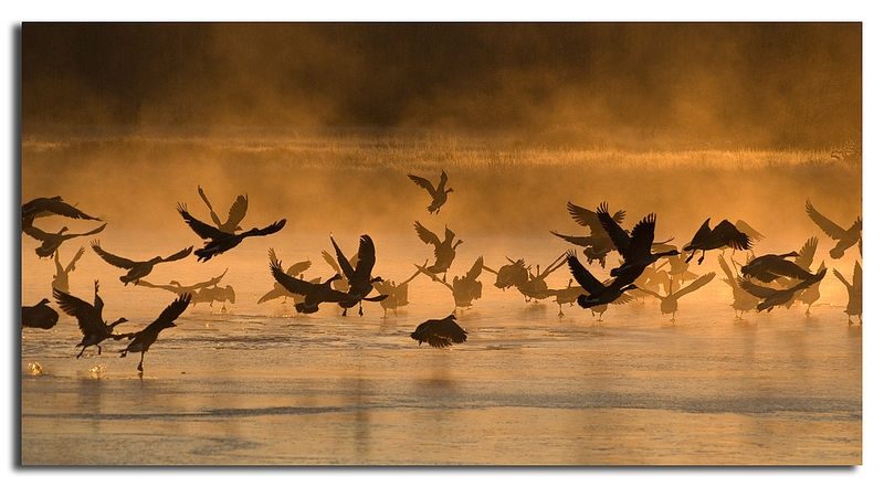 Geese In The Mist II