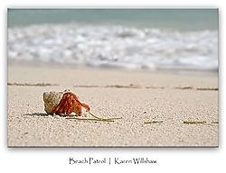 Hermit Crab Beach Pa... (Marjani)