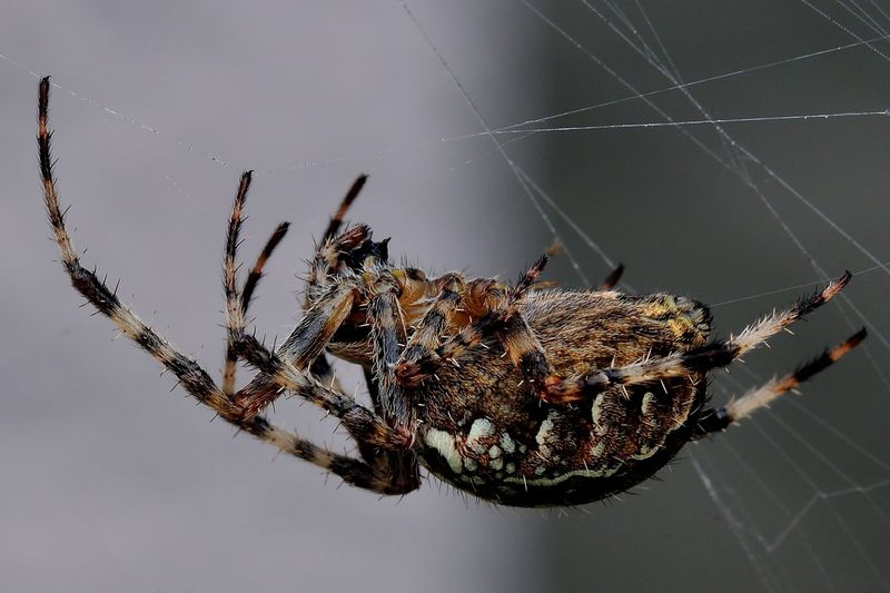 cross spider's web