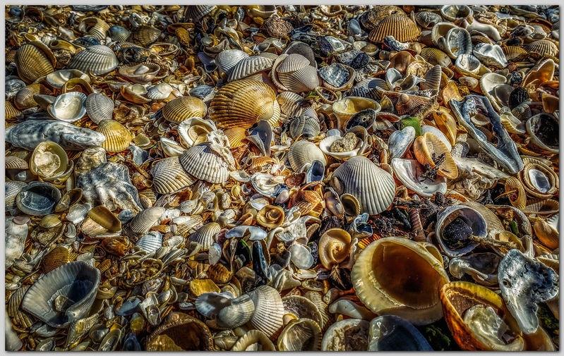 #2 Shells