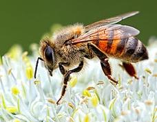 "Winner June Macro   Theme: ""Bugs""   Pollinating the Earth  D200 | Nikkor 200 Micro | f/11 @ 1/60 | ISO 200 | tripod"