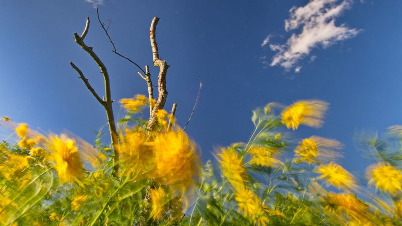 Flowers in the Wind 1