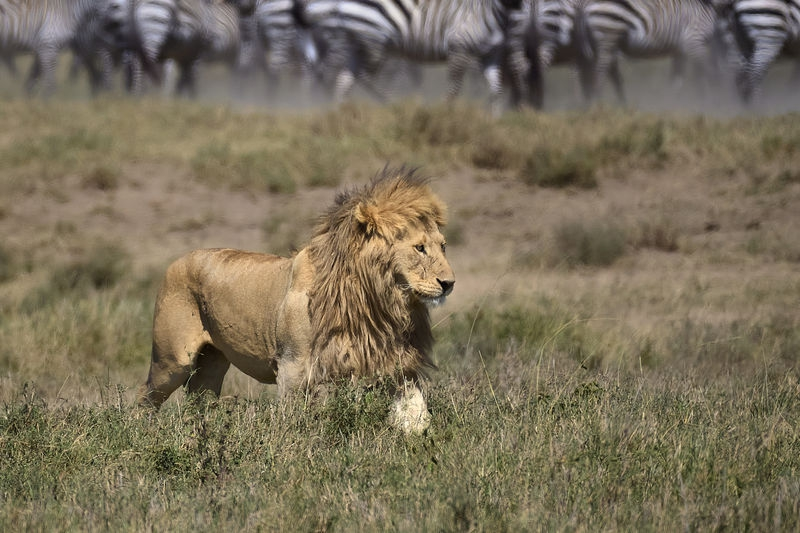 2-_Serengeti_ND51756