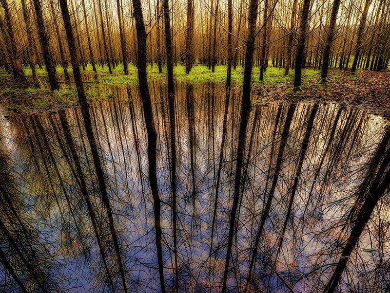 Trees in Reflection