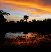 Photo trip to the Pantanal, South America