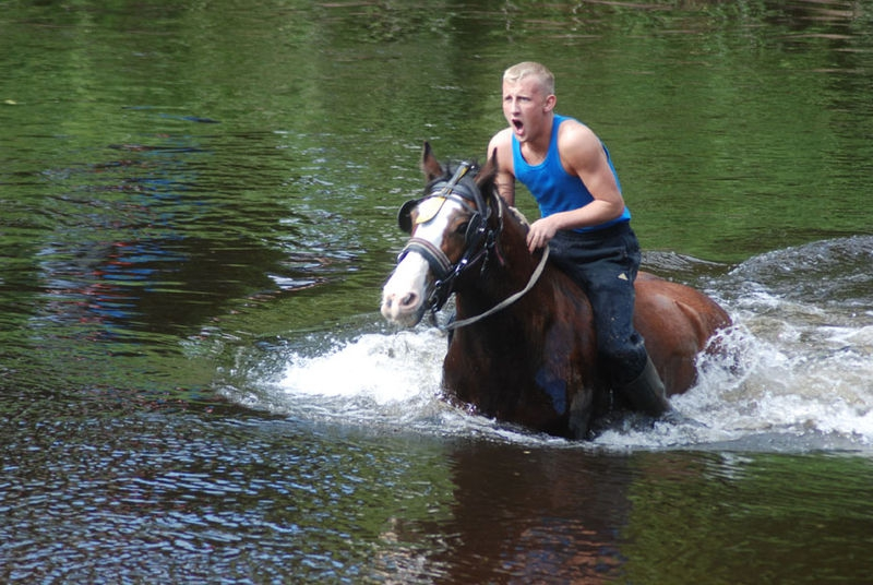 Swimming the horses 1
