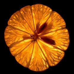 lemon slice /DeanAZ/