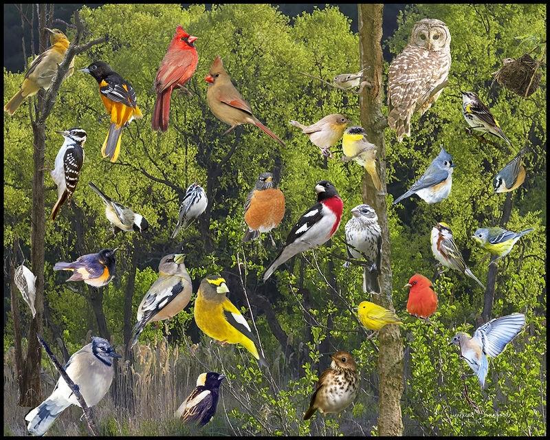 Vermont Birds Composite