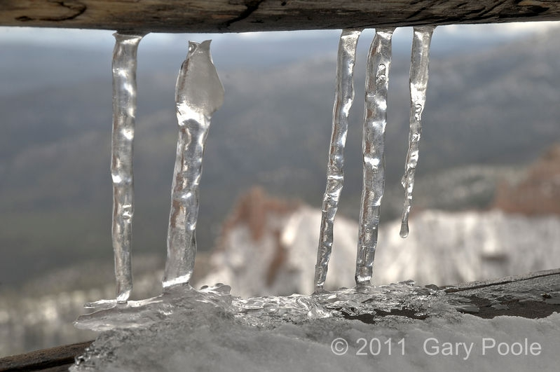 Ice Cycles on Fence