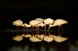 Winner March Wildlife