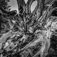 Ansel Adams: His contribution to Photography and Nature