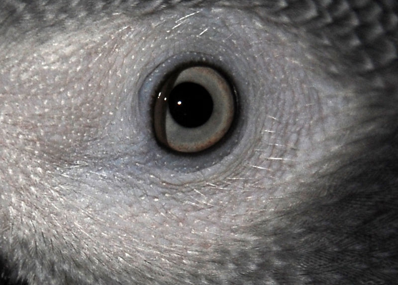 A Parrot's Eye