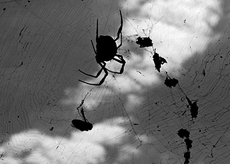 spider and food