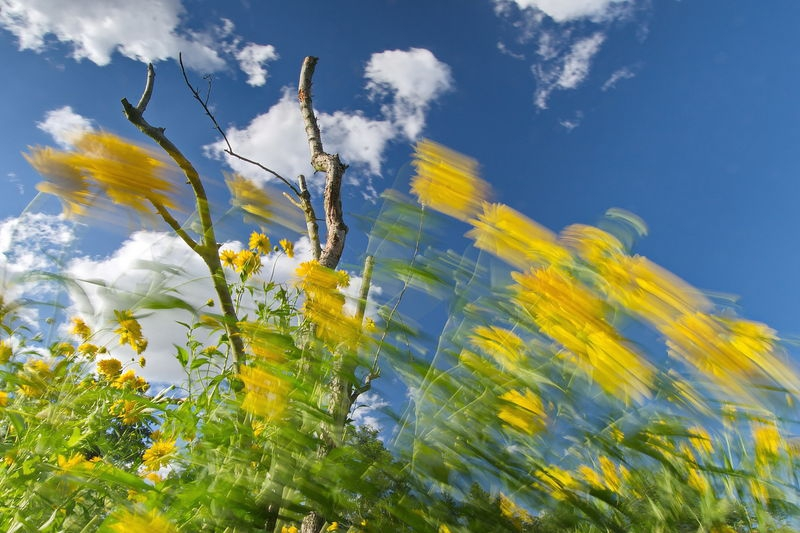 Flowers in the Wind 2
