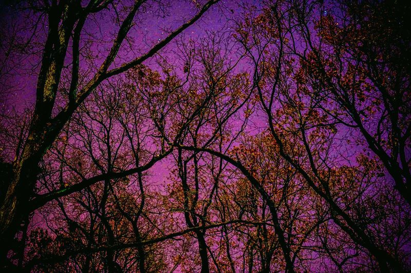Some_Stars_Through_The_Trees_1