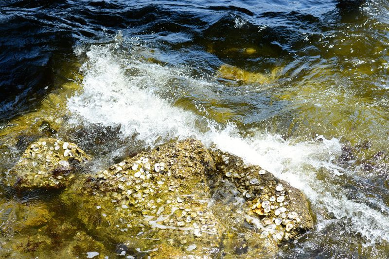 Rocks and Sea Shells