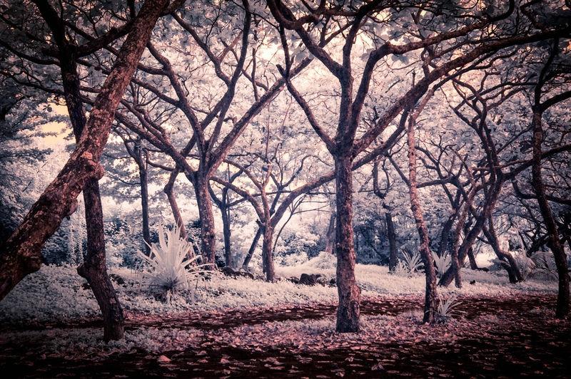 SHORELINE_TREES