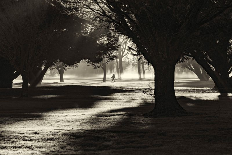 Morning frost and mist