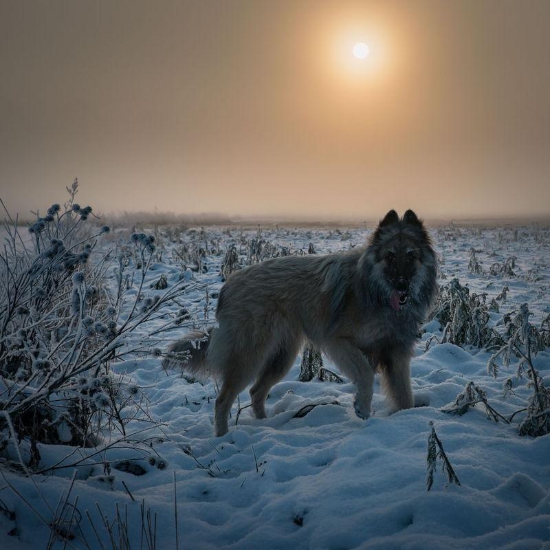 Hund 6511