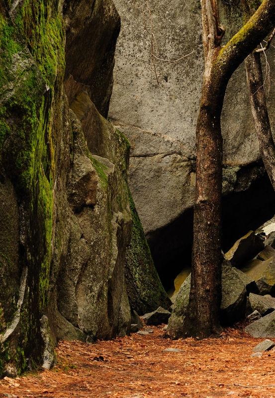 Japanese Garden at Lower Yosemite Falls