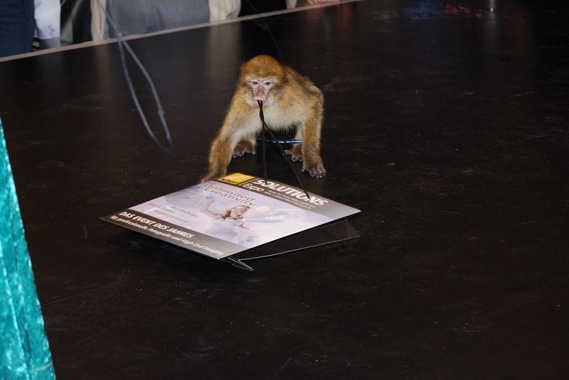 Felix the NSE Monkey