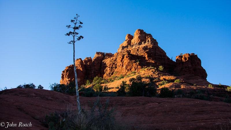 Bell Rock at Sunrise