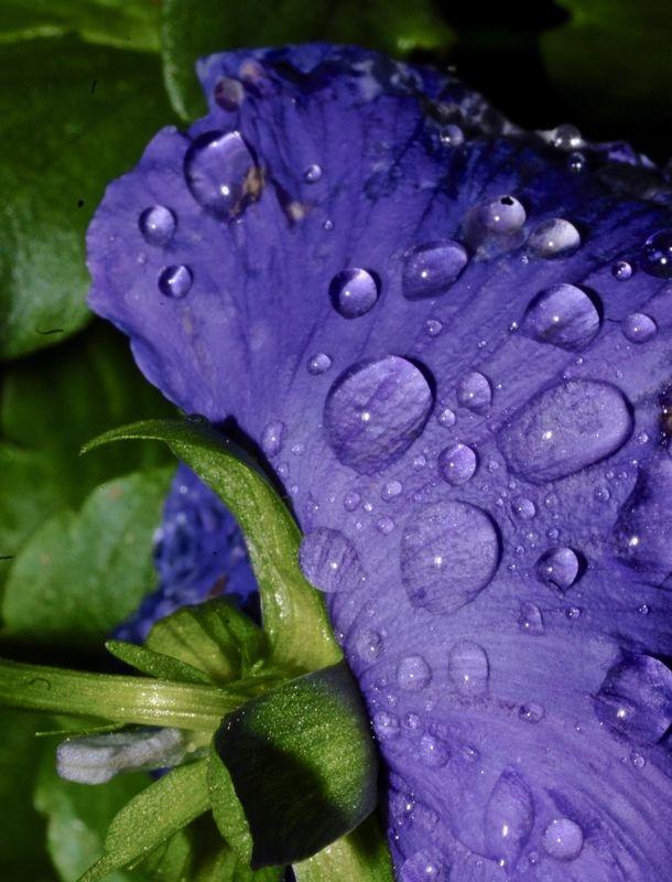 After a Rain