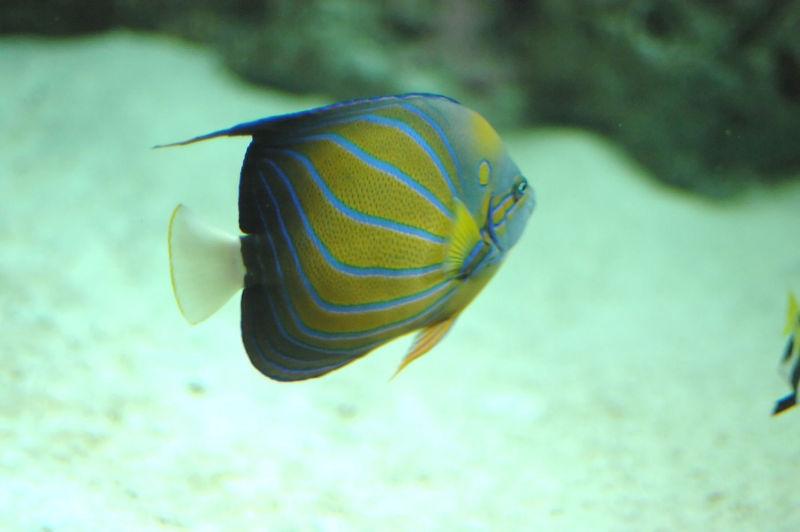 A trip to the Georgia Aquarium