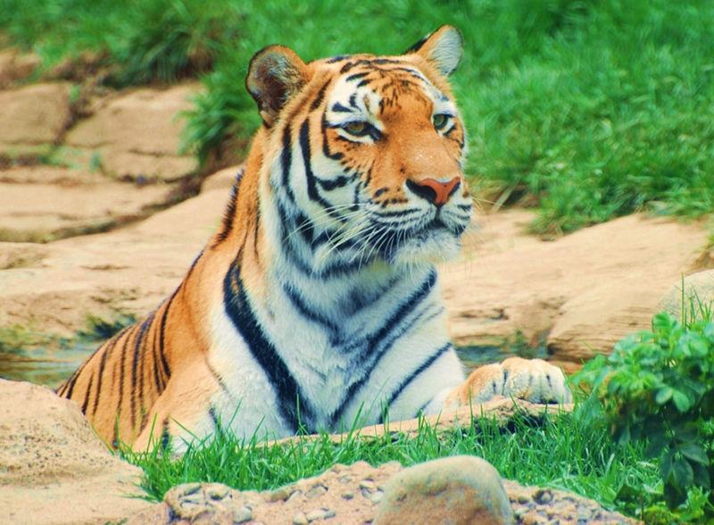 Tiger22