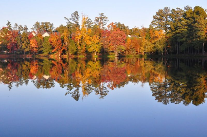 Fall color Mirror