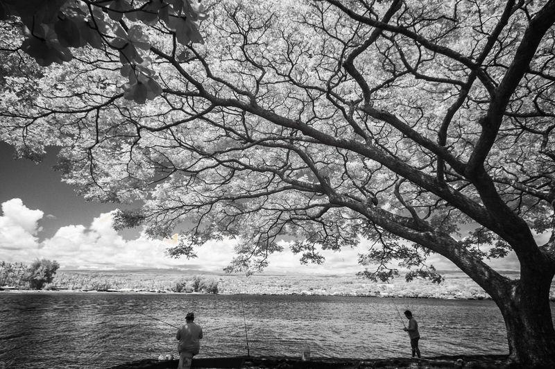 UNDER_A_RAIN_TREE