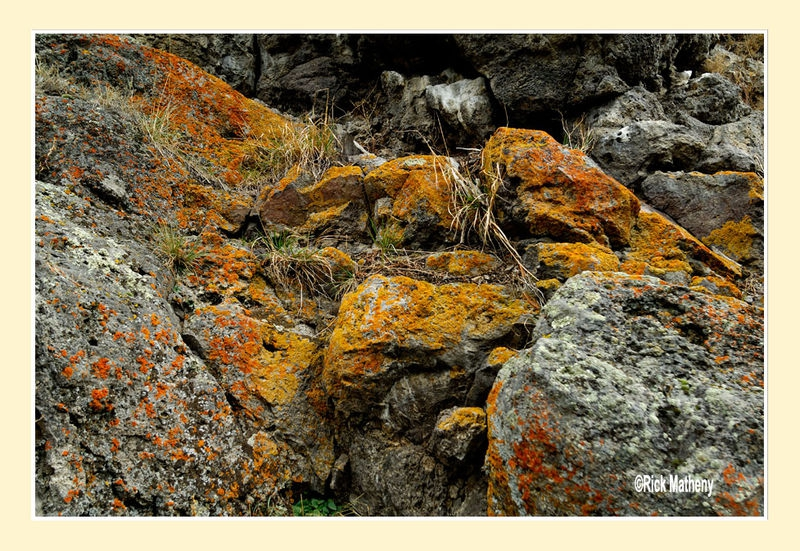 Lichens above Old Faithful