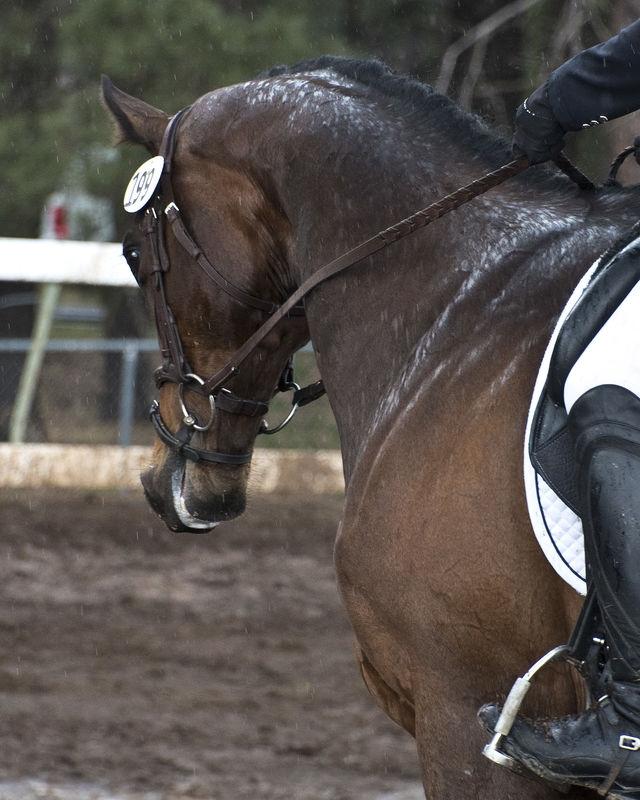 Coconino Horse Trials