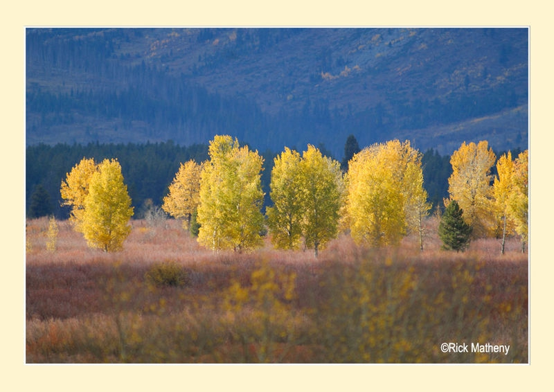 Willow Flat Aspens