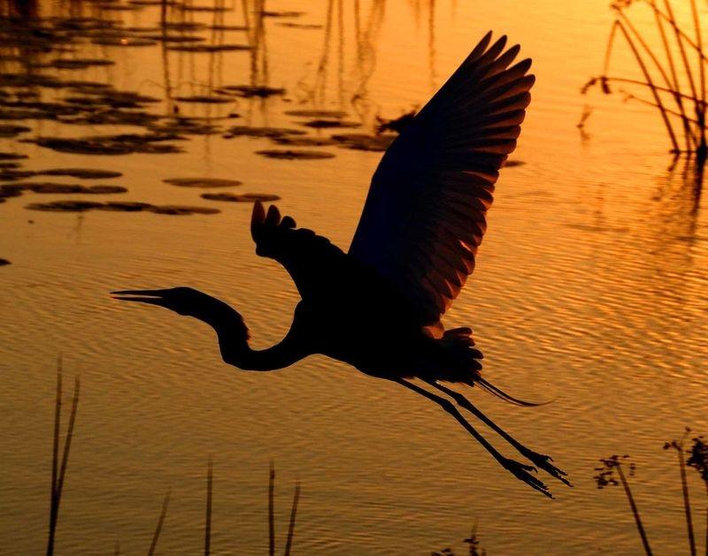 Take off at sunset