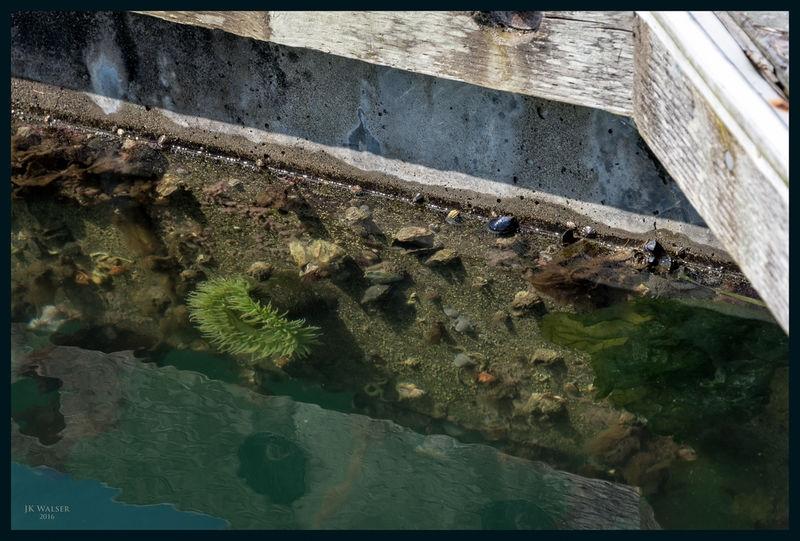 Aquatic Homestead