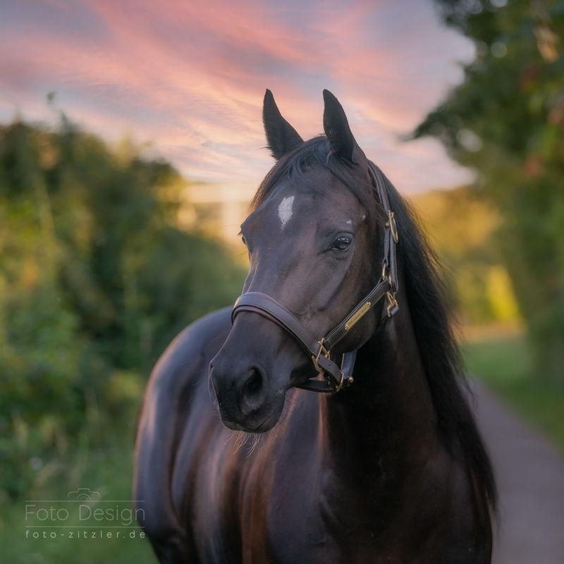 horse 9240