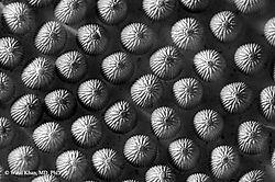 Bug Eggs (WK)