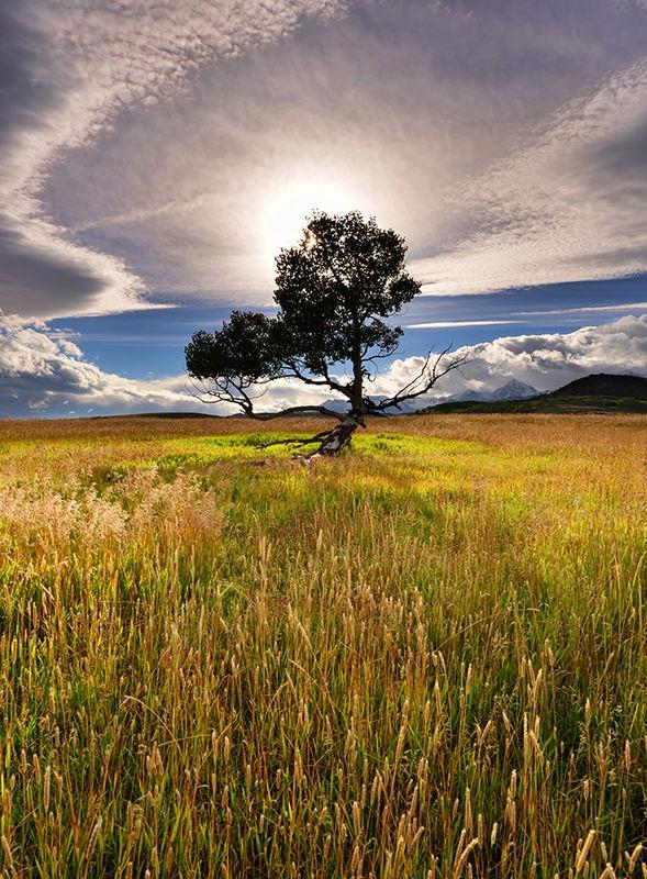 Colorado Lone Tree