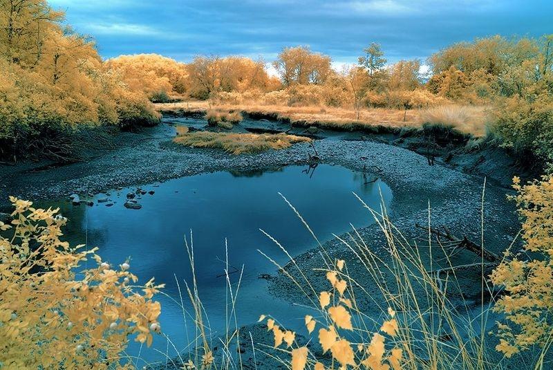 Tidal Creek - Cowichan Estuary