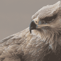 Story from the Field: The Eagle That Refused to Die