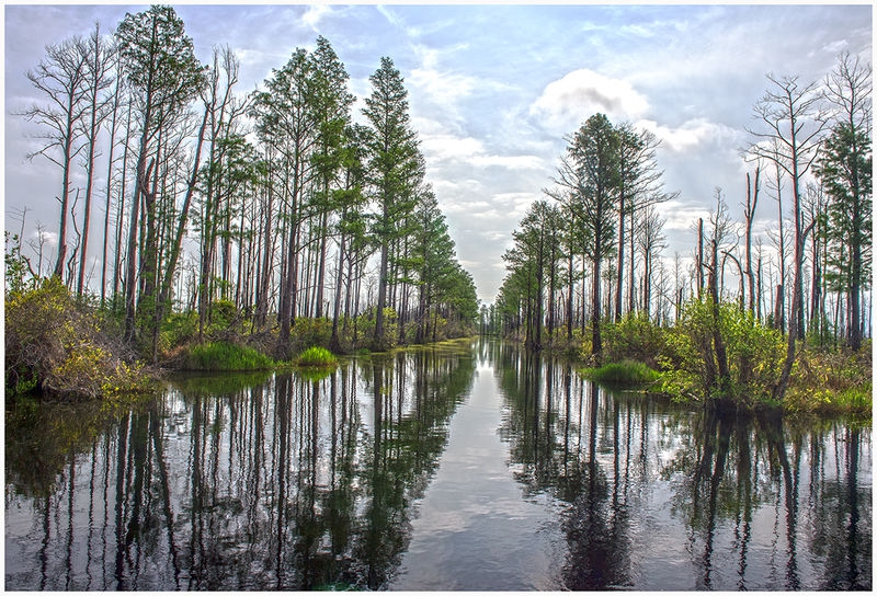 Okefenokee Canal-PM