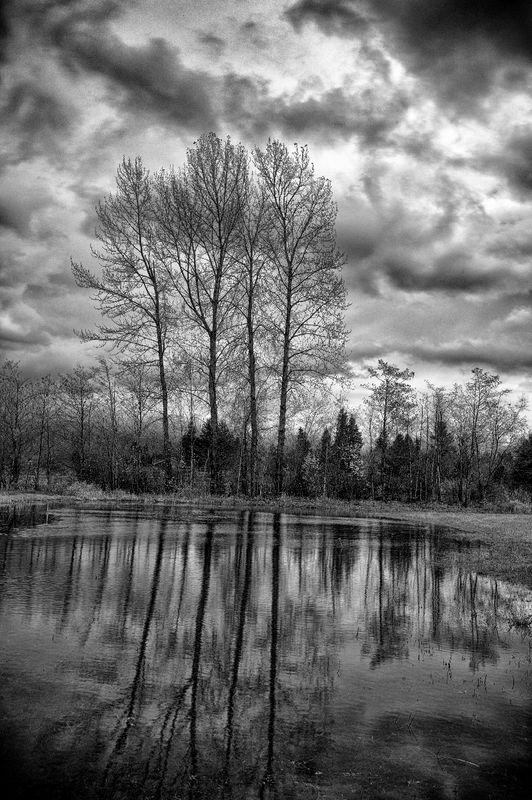 Hanagen_Road_Tree_Reflection_1.jpg