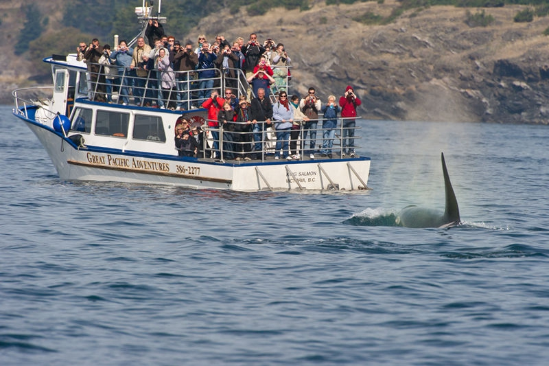 Orca 3SA4408