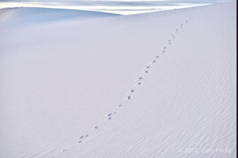 Critter Tracks on Sanddune