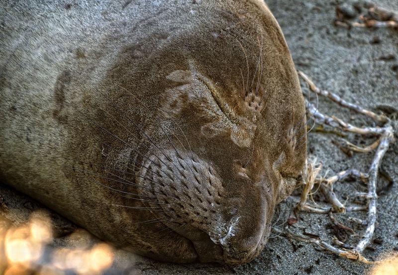 Sleeping Beauty, Big Sur Style