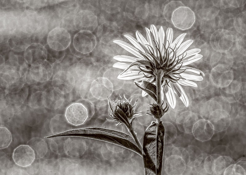 back-lit flower
