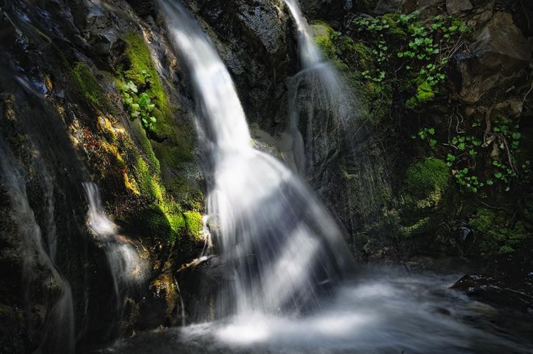 Sun-Dappled Glen:  Salmon Creek Falls