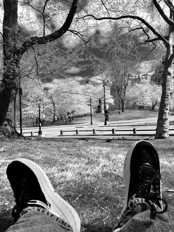 Central Park Bliss