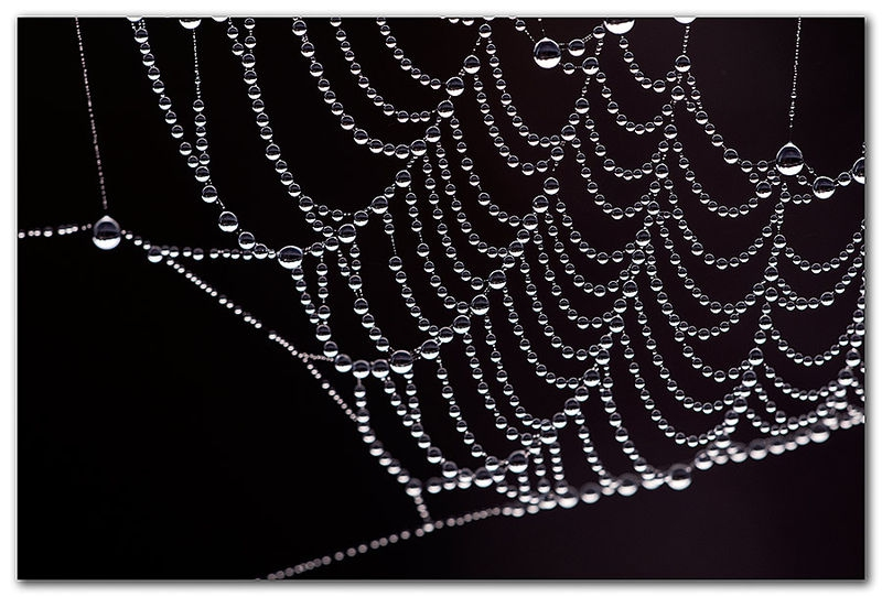 Early Morning Jewels